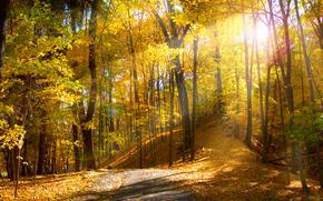 осень, лес, дорога, деревья, лучи, природа