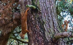 дерево, белки, животные