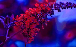 цветок, стебель, макро, флора