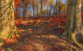 лес, деревья, холм, осень, природа