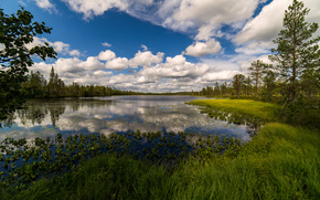 река, лес, деревья, облака, пейзаж