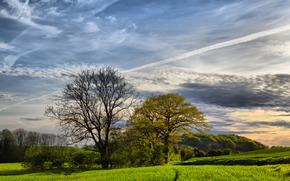 поле, деревья, небо, пейзаж