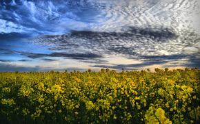 поле, небо, пейзаж