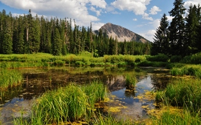 Munți, pădure, mlaștină, peisaj