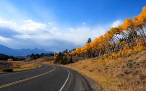 toamnă, rutier, copaci, peisaj