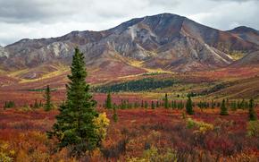 Munți, toamnă, copaci, peisaj