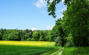 domeniu, rutier, copaci, pădure, peisaj