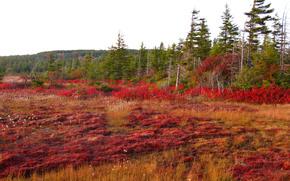 autumn, field, trees, landscape