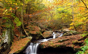 forest, Rocks, waterfall, autumn, trees, nature