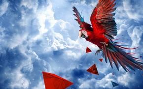 papagaio, arara, pássaro, céu, Nuvens, detritos, 3d, arte