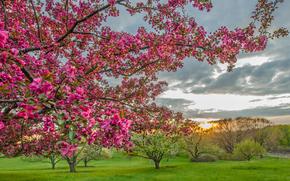 сад, деревья, цветы, пейзаж