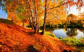 Birch, nature, autumn, river, trees, foliage