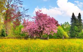 поле, сад, деревья, пейзаж
