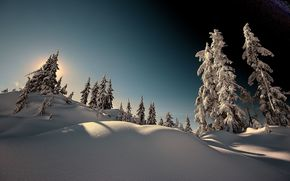 winter, trees, spruce, snow, landscape