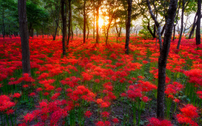 sunset, forest, trees, Flowers, nature