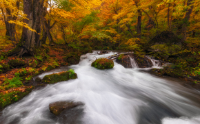 forest, trees, autumn, river, nature