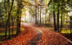 toamnă, rutier, pădure, copaci, ceață, peisaj
