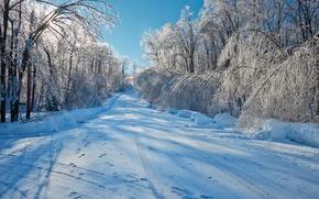 iarnă, rutier, copaci, peisaj