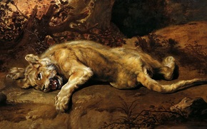 Art, picture, painting, Frans Snyders, The Lioness, lioness, lies