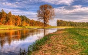 toamnă, râu, copaci, peisaj