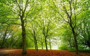 pădure, copaci, natură