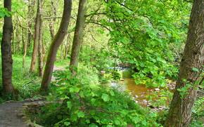 лес, деревья, речка, дорога, природа