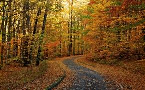 дорога, осень, деревья, лес, природа, пейзаж