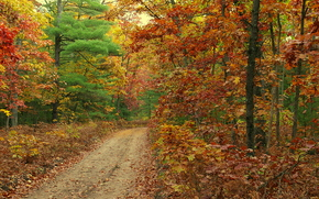 forest, road, trees, nature