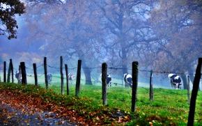 field, pasture, COW, fog