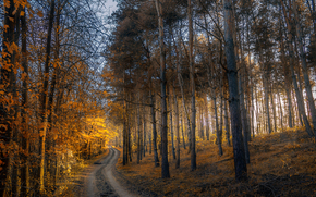 autumn, forest, trees, road, nature