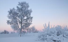 winter, sunset, trees, landscape