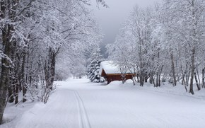 hiver, route, cabine, arbres, paysage