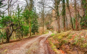 forest, road, trees, landscape