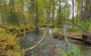 autumn, forest, trees, river, nature