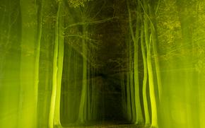 лес, деревья, дорога, свет