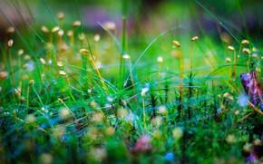 мох, трава, макро
