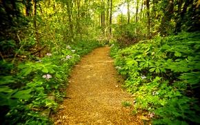 лес, дорога, деревья, природа