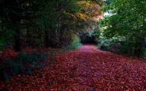 осень, дорога, деревья, лес, природа