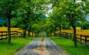 дорога, деревья, забор, поля, пейзаж