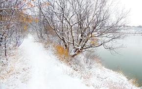 winter, river, road, trees, landscape