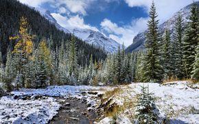 râu mic, Munți, copaci, peisaj