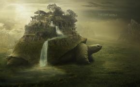 черепаха, водопад, лицо, лестница