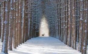 pădure, iarnă, cerb