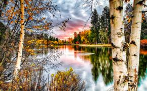 otoño, río, árboles, paisaje