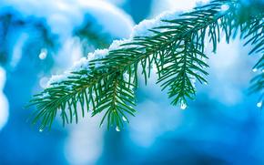 invierno, rama, ataviar, agujas, Macro