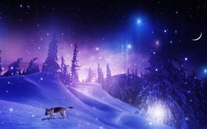 noite, inverno, neve, árvores, cão