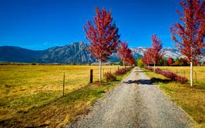 toamnă, rutier, Munți, copaci, domeniu, peisaj