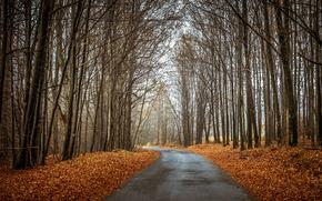 pădure, toamnă, copaci, rutier, peisaj