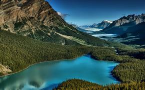 Peyto Lake, Banff, Alberta, Canada, lac, Munți, copaci, peisaj