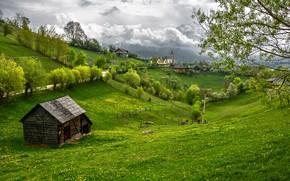Transylvania, Draculas castle, дорога, поле, холмы, дома, замок, деревья, пейзаж
